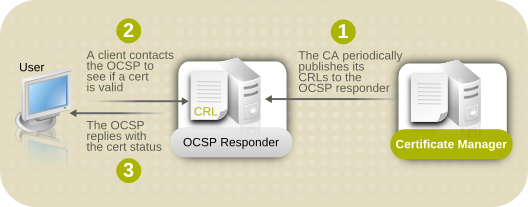 CA および OCSP